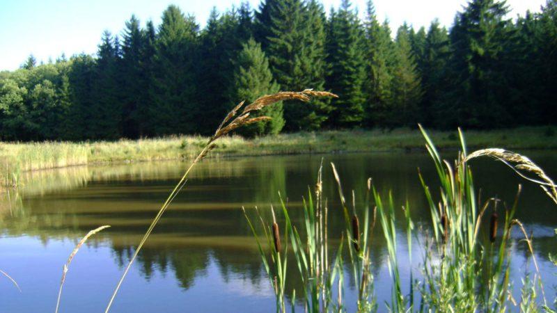 Jeden z mnoha rybníků