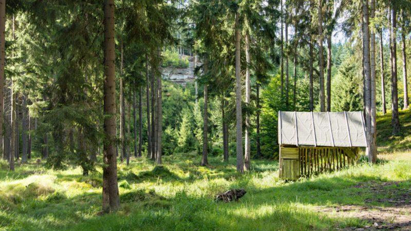 České Švýcarsko - Zdejší příroda je opravdu nádherná.