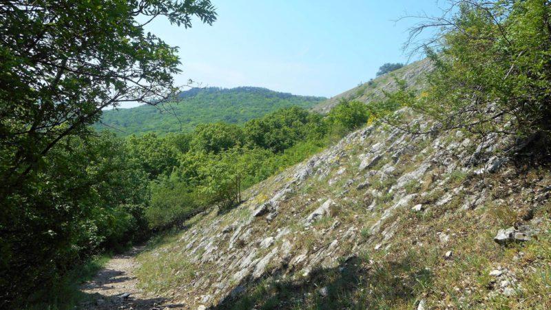 Jedna z mnoha lesních cestiček
