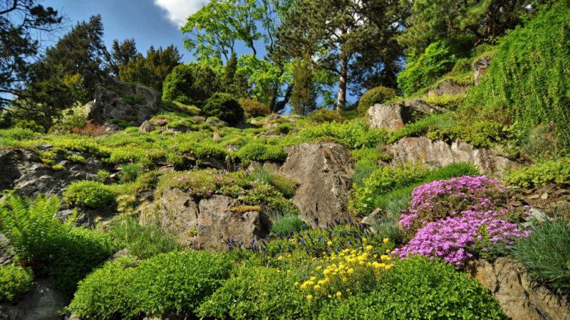 Magnolie, azalky a rododendrony všechno najdete v Průhonickém parku