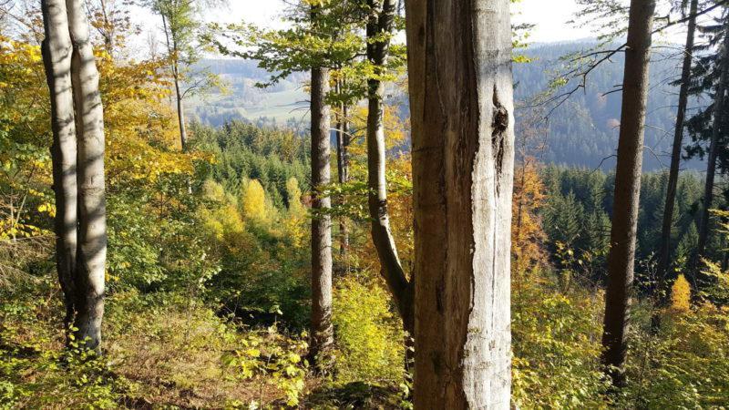 Krásné lesy ve Devět skal a Žďárských vrších