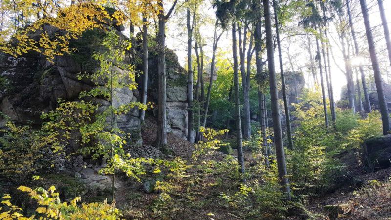 Krásné lesy pod Devíti skalami