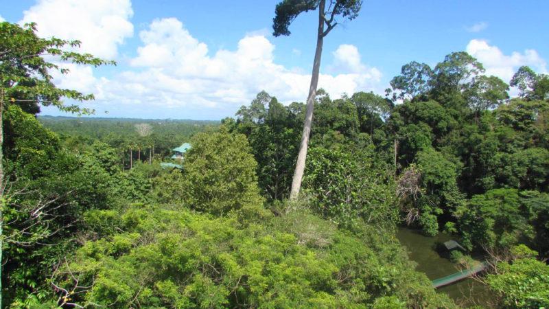 Džungle stále zaujímá většinu plochy ostrova