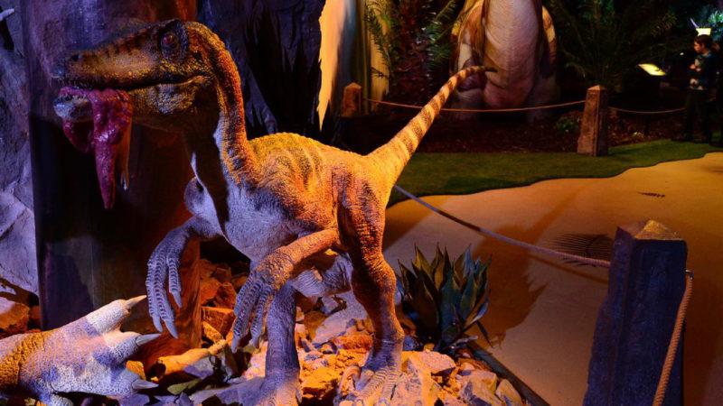 Dinosauři jsou všude, kde se podíváš