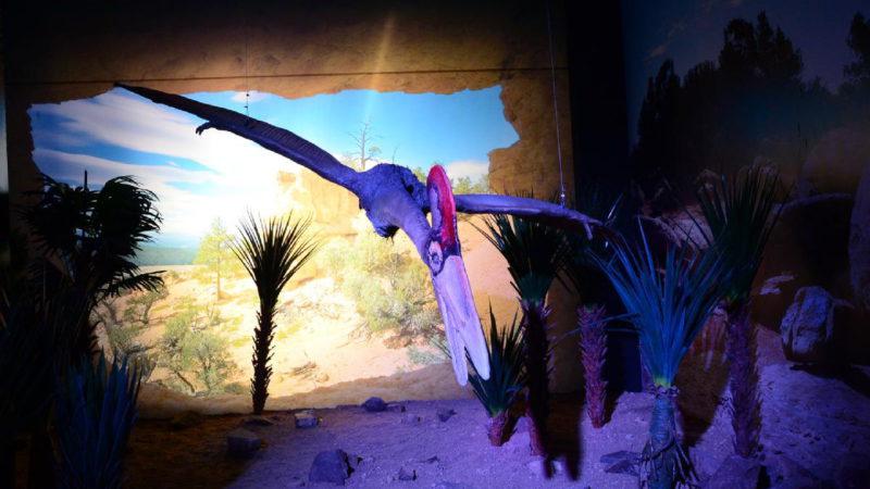Někteří dinosauři byly opravdu bizardní