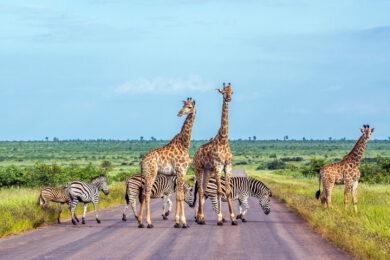 Mapy Afriky pro vás – Nejlepší mapy (geografická, politická, slepá) ke stažení