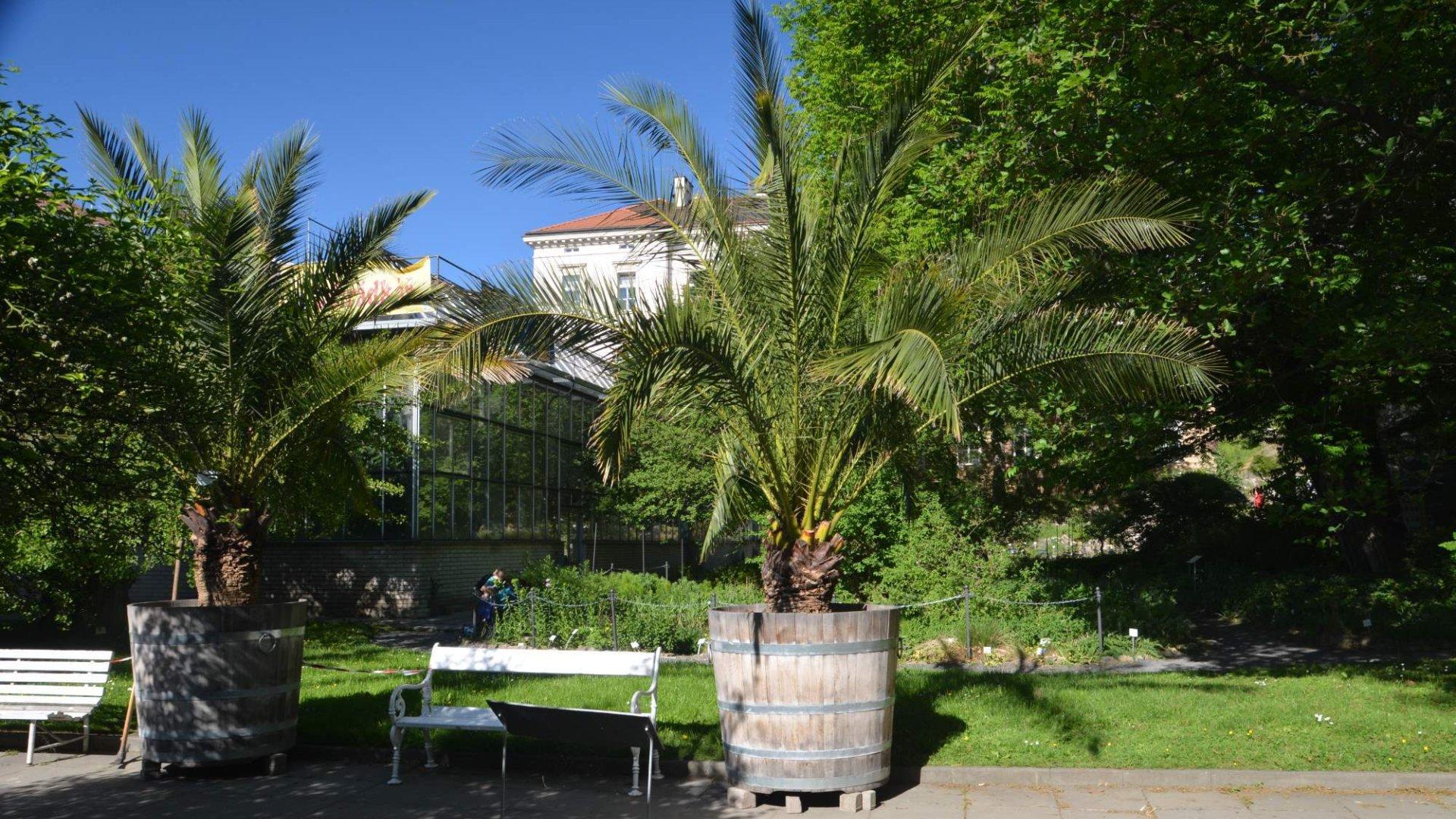 Botanická zahrada Albertov na Slupi – Průvodce areálem a tipy
