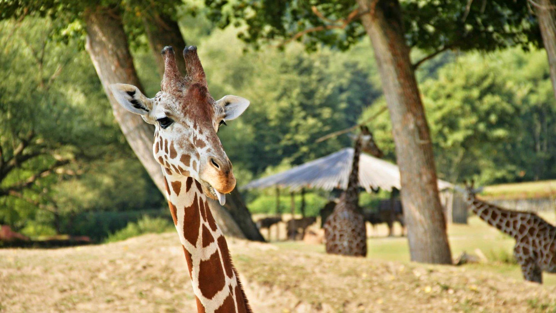 Zoo Dvůr Králové nad Labem – Osobní průvodce a vše důležité (ceník, otevírací doba)