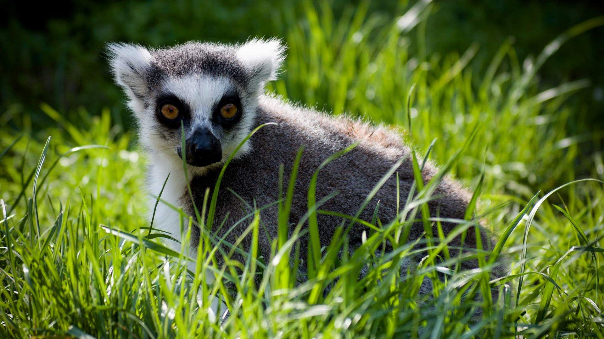 Zoologická zahrada Plzeň – Otevírací doba, vstupné, zvířata