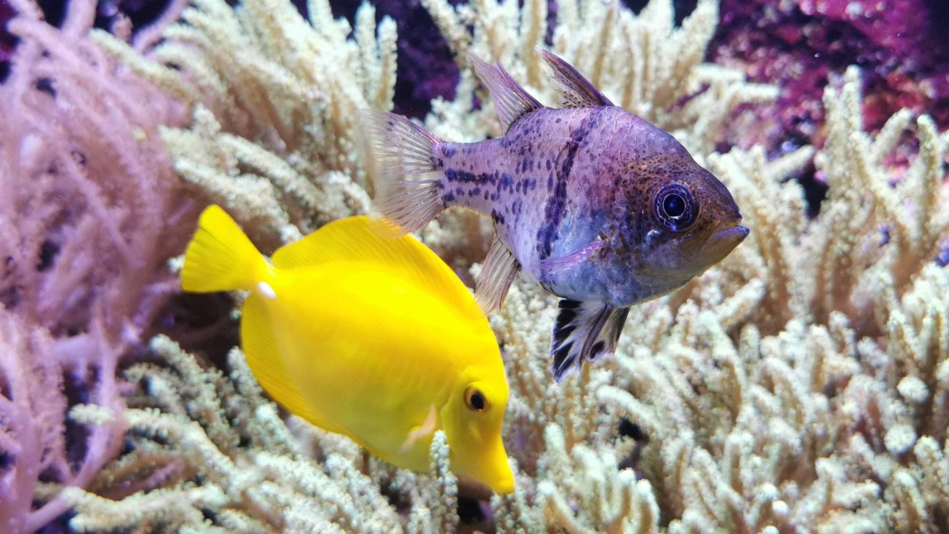 Mořský svět Praha Holešovice – Unikátní akvária a vodní ZOO