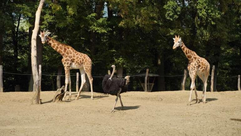 Zoo Lešná ve Zlíně – Průvodce skvělou zoologickou zahradu