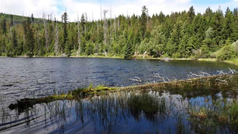 Jezero Laka na Šumavě – Trasa a nejlepší průvodce