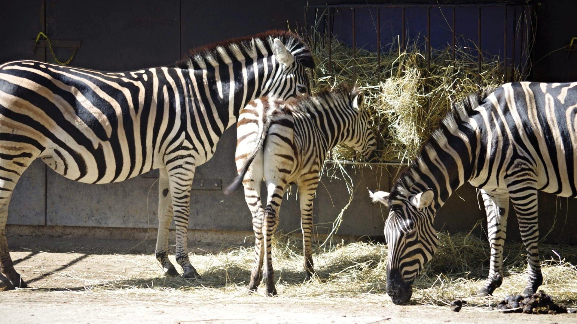 Zoo Hodonín – Vstupné, mapa, ceník, podrobný průvodce
