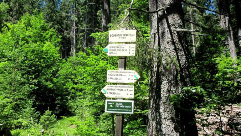 Boubínský prales – Vstup, výlety a největší zajímavosti