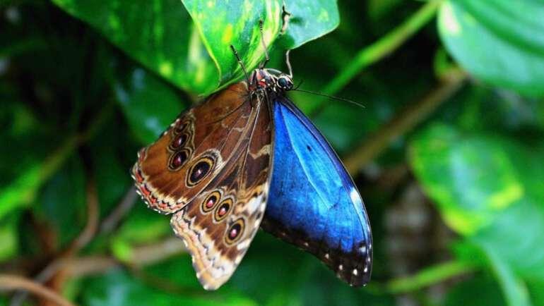 Motýlí dům Karlovy Vary (u restaurace Diana) – Osobní průvodce barevným světem